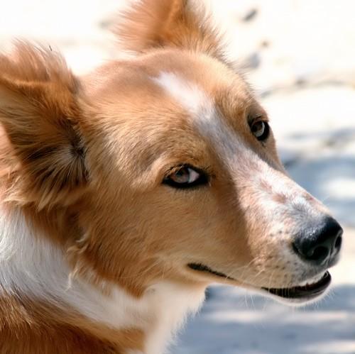 comment choisir son chien kanidikoi comportement et ducation du chien. Black Bedroom Furniture Sets. Home Design Ideas