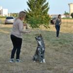 Rencontre entre un chien adulte et un chiot