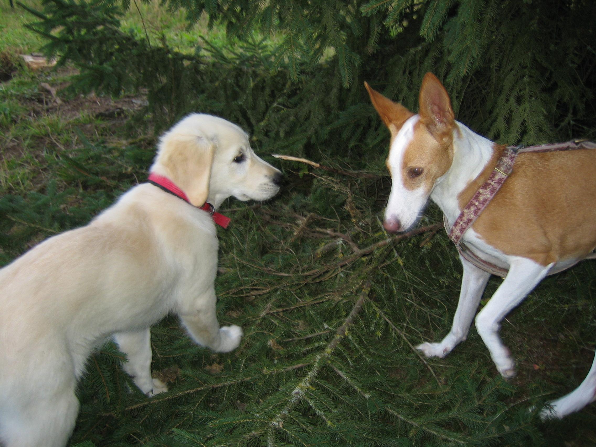 Rencontre celibataire avec chien